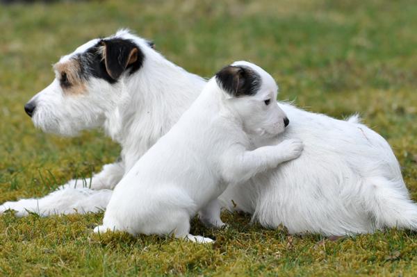 Auld Lang Syne mit Mama Milou